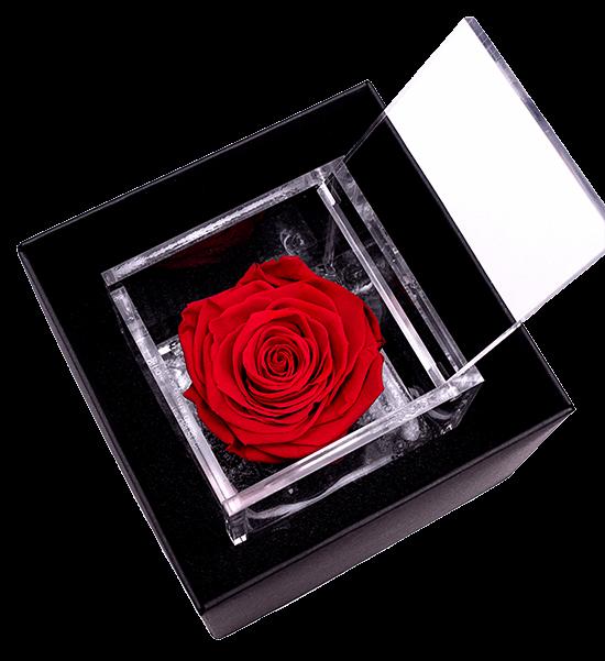 rosa flowercube